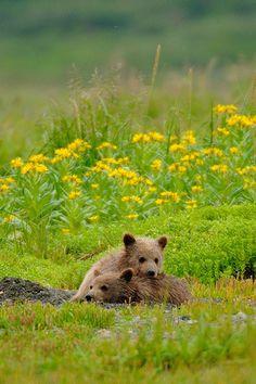 Cute Cubs