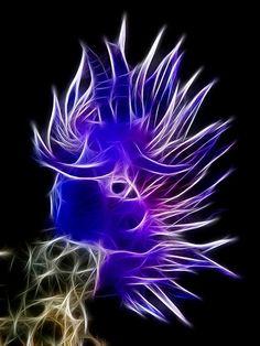 Acid Flabellina Affinis - is a species of sea slug, an aeolid nudibranch, a marine gastropod mollusk in the family Flabellinidae. Under The Water, Life Under The Sea, Under The Ocean, Sea And Ocean, Underwater Creatures, Underwater Life, Ocean Creatures, Beautiful Sea Creatures, Sea Slug