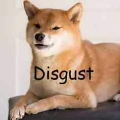 Me @ the grown men who look at underage girls and say it's nothing bad because it's just looking, but it freakin makes us uncomfortable and I don't appreciate it at all or take it as a compliment so please don't thanks