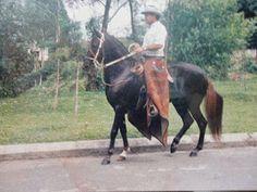 CABALLOS COLOMBIANOS: CABALLOS HISTORICOS DEL PASO FINO COLOMBIANO Horses, Animales, Culture, Musica, Horse