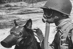 un soldat et ses masques à gaz d'usure de berger allemand de se protéger contre la guerre chimique. Chiens: (Photo US War Association Chiens) guerre est venue à la rescousse de la Première Guerre mondiale 2 (magazine de Reminisce)