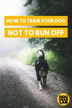 Dog Obedience Training Is your dog a door dasher or an escape artist? Check out these dog obedience training tips on how to teach your dog not to run off and train your dog to listen better. Dog Training Techniques, Dog Training Tips, Potty Training, Training Classes, Agility Training, Training Schedule, Dog Agility, Obedience Training For Dogs, Therapy Dog Training