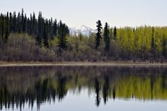 DESPITE STRAIGHT LINES posted a photo:  This photograph was taken an altitude of Seven hundred and ten metres, at 12:10pm on Saturday May 14th 2016 between Johnsons Crossing and Teslin, on the shoreline of Teslin Lake off the Alaska Highway 1 in Northern British Columbia, Canada.  Teslin Lake has a length of seventy five miles, spaning the border between British Columbia and the Yukon Territory. The name 'Teslin' means 'Long water'. In the distance is Mt Lorne in Yukon Territory…