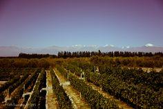 https://flic.kr/p/h1RDAj   Wine and Andes   @ Mendoza, Mendoza, Argentina, South America.