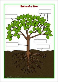 Parts of a tree poster/worksheet (SB10351) - SparkleBox