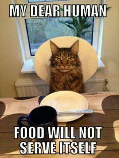mi querido humano, la comida no se sirve sola
