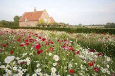 A meadow garden