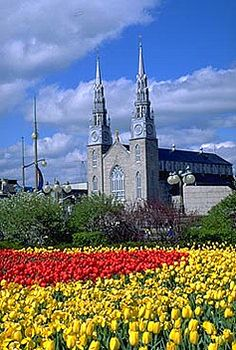 Tulipmania, Ottawa, Canada: May 3-20: Ottawa's tulip tradition began in 1946 when Princess Juliana of the Netherlands gave the city 100,000 bulbs in appreciation for sheltering her Royal Family during World War II and the role Canadian troops played in liberating her country.    Over the years, the Netherlands' annual gift was supplemented by bulbs from other countries, and Ottawa's Tulip Festival flourished to become the largest, most lavish one in the world.
