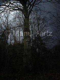 Baum im Mondlicht