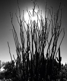 Burn Burns, World, Plants, The World, Plant, Planets