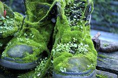 australia green Boots Magic forest garden plants moss