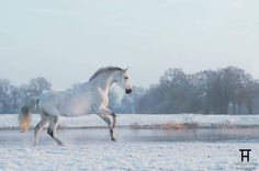 ww.horsealot.com, the equestrian social network for riders & horse lovers | Equestrian Photography : Talitha Hölscher.