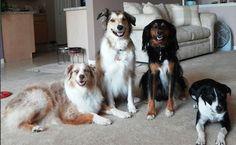 dogs... awww!