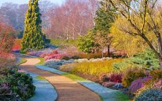 Cambridge University Botanic Garden is one of the best-known winter gardens in the country (botanic.cam.ac.uk)