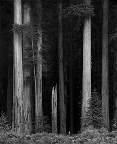 Figure in Redwoods, Copyright 1974 Jonathan Stuart, more: http://tweedsandtales.tumblr.com/post/8348848885/extraordinary-photography-by-jon-stuart http://www.lefotografie.com/products/Figure-in-Redwoods%2C-Copyright-1974-Jonathan-Stuart.html