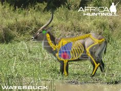 Grands gibiers africains - Le blog de Alex.bowhunter Africa Hunting, Boar Hunting, Giraffe, Elephant, Hunting Guide, Impala, Kangaroo, Bows, Animals