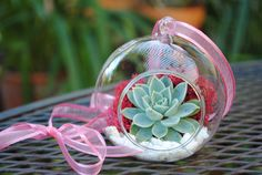 Valentine's Terrarium - TREASURY LIST item- One DIY kit with glass orb, succulent, pink moss and white pebbles