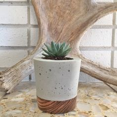 Large Concrete Planter - Zebra Wood Base