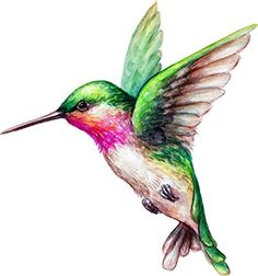 Embroidery Statin Stitch Watercolor Illustration Flying Hummingbird Isolated On White Background Exotic Tropical Wild Life Clip Art Stock Vector Art Hummingbird Tattoo Watercolor, Hummingbird Drawing, Watercolor Bird, Watercolor Illustration, Hummingbird Illustration, Art Colibri, Tattoo Oma, Bird Drawings, Clipart