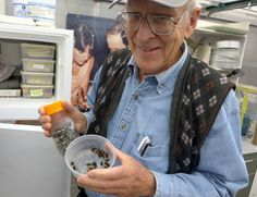 Paul Williams, founder of the Fast Plant program at UW–Madison, holds bumblebees that are used to pollenate the rapid-cycling Brassica plants. Photo by David Tennenbaum.