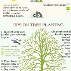 This graphic describes the benefits of having a tree planted close the house, as well as professional tips on how to find the perfect place for it.