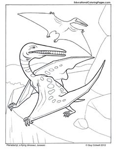 Pteradactyl Coloring Pages Dinosaur Pictures