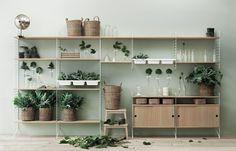 string shelv, interior, shelving units, shelves, plants