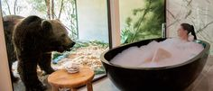 Jamala Wildlife Lodge invites you to spend a luxurious night at the National Zoo & Aquarium in Canberra