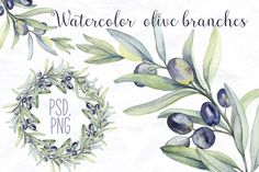 Watercolor botanic olive branch by Spasibenko Art on Creative Market