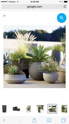 Container Gardening Ideas Container gardening pots - Create a gorgeous outdoor area with our container garden ideas. See the three essential elements for container gardening. Outdoor Pots, Outdoor Gardens, Large Outdoor Planters, Modern Gardens, Outdoor Ideas, Small Patio, Container Plants, Container Gardening, Container Design