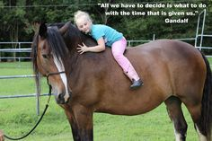 All Kaitlain wanted for her birthday was to meet a Shire! She spent hours just loving on all the Shires! Be Inspired! Shire Horse, Birthday Wishes, Just Love, Farms, Meet, Horses, Inspired, Animals, Special Birthday Wishes