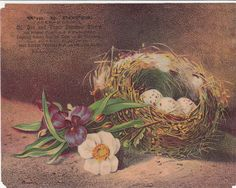 Wm B Potts Oil Gas Stoves Nest w Eggs Flowers Victorian Trade Card  c 1880s
