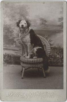 #Cabinet Card- Dog Portrait  Like,Repin,Share, Thanks!