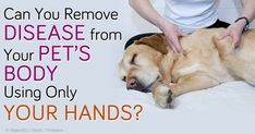 Jonathan Rudinger, a registered nurse and licensed massage therapist, discusses how massage therapy helps heal pet's diseases. http://healthypets.mercola.com/sites/healthypets/archive/2014/08/10/pet-massage-therapy.aspx