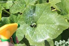 10 Ways Hydrogen Peroxide Will Make Gardening Easier3