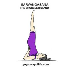 shashankasana  the hare pose in 2020  upper body
