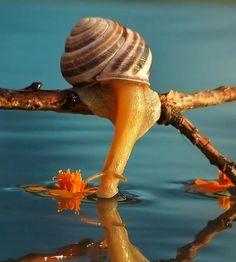 Le fascinant monde miniature des escargots photographié par Vyacheslav Mishchenko