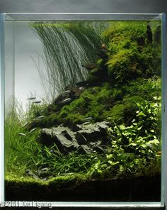 Beautiful small vertical tank. Terrarium, fish tank, or both? Sandwiched layers could make it a spectacular combination, no?