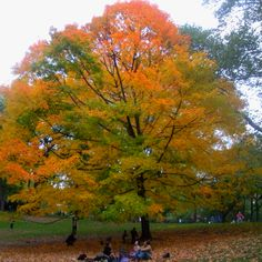 Picnic in the Fall... Central Park...