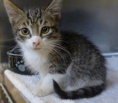 Foster Kittens! ● Burlington County Animal Shelter ● 609-265-5073 ● 35 Academy Drive, Mount Holly, NJ 08060