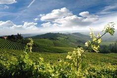 Diano D'Alba - #Langhe Piemontesi - (cn)