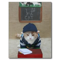 A funny postcard for back to school or for any teacher-to-parents announcements. (...like PTA meetings...bake sales...trips to the zoo or museum...etc.) You can customize with text. #funny #humor #cat #cats #school #back #to #school #summer #is #over #'funny #funny #cat #picture #funny #cat #photo #funny #cat #image #bubba #kitty #bubba #kitty #scottish #fold #teacher #classroom #teacher #postcards