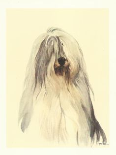Old English Sheepdog OES Dulux dog colour print by Willie Bar 1975 dog print