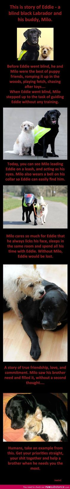 """True friends. The story of Milo"