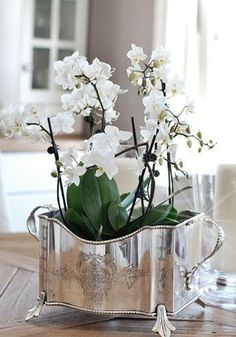 Explore these stunning and beautiful Phalaenopsis orchid arrangements. Find a wide range of exciting orchid arrangement ideas that includes potting your orchids in antiques, birdcages and much more! White Orchids, White Flowers, Beautiful Flowers, Silver Flowers, Beautiful Things, Vibeke Design, Orchid Arrangements, Phalaenopsis Orchid, Deco Floral