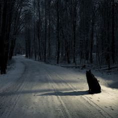 Dog in the Road - by Anssi Lehtonen
