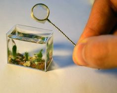 smallest fish tank in the world!