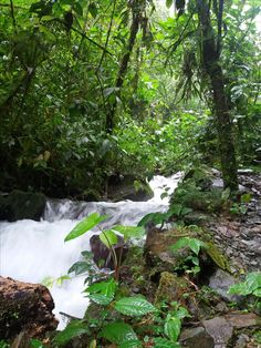 rivulets of Bucay - Ecuador