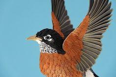 Extrem realistische Vögel aus Papier