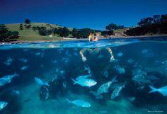 Snorkelling at Goat Island Near #matakana